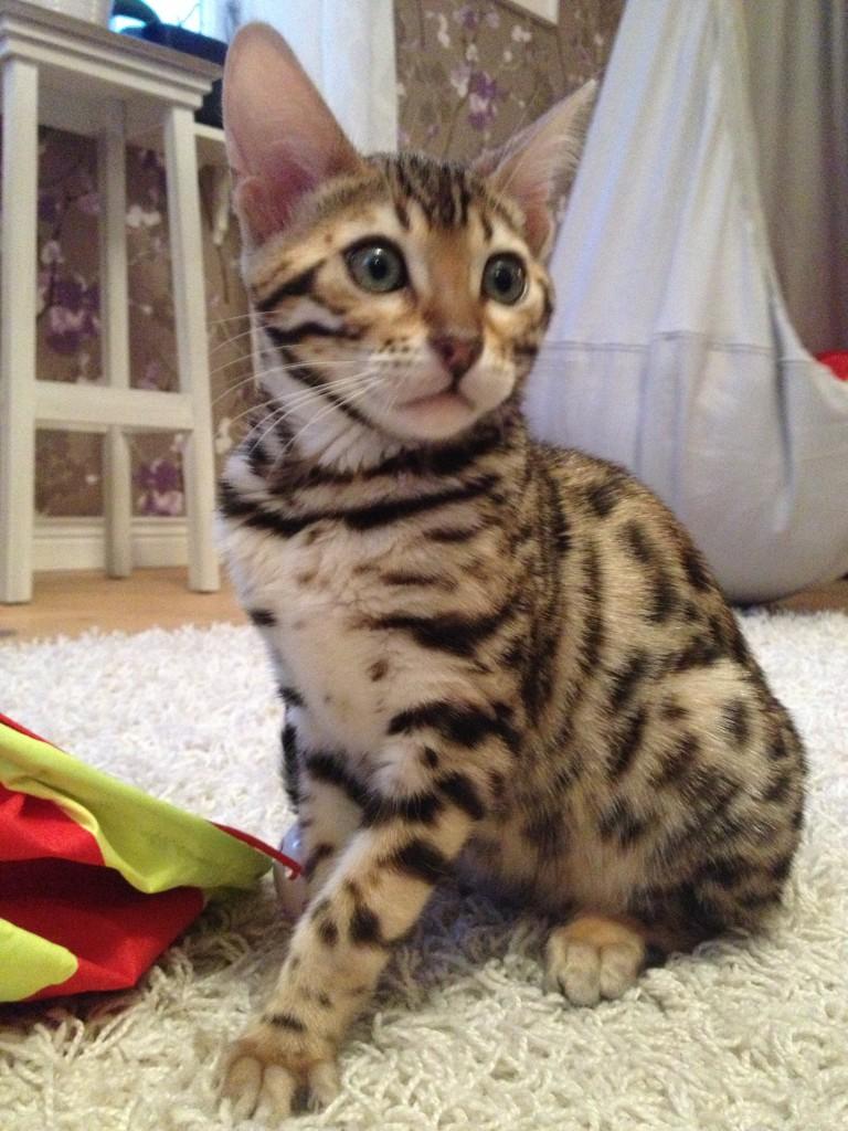Grannens fina katt, januari 2014 005